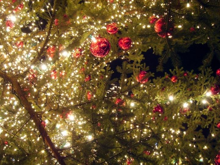 Presepi di Natale a Livorno e provincia Foto